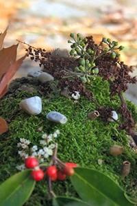 Achtsam Pflanzen