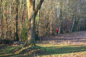 Eine Gehmeditation im Waldrand